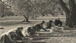 Mujeres-aceituna_mapama-1952.-Autor-Eudaldo-Pedrola-Millan